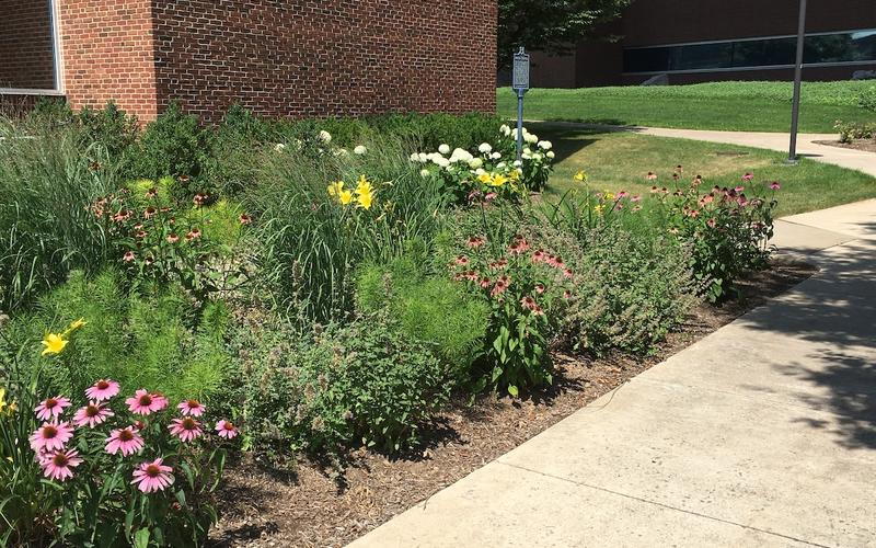 A campus flowerbed with a variety of flowers