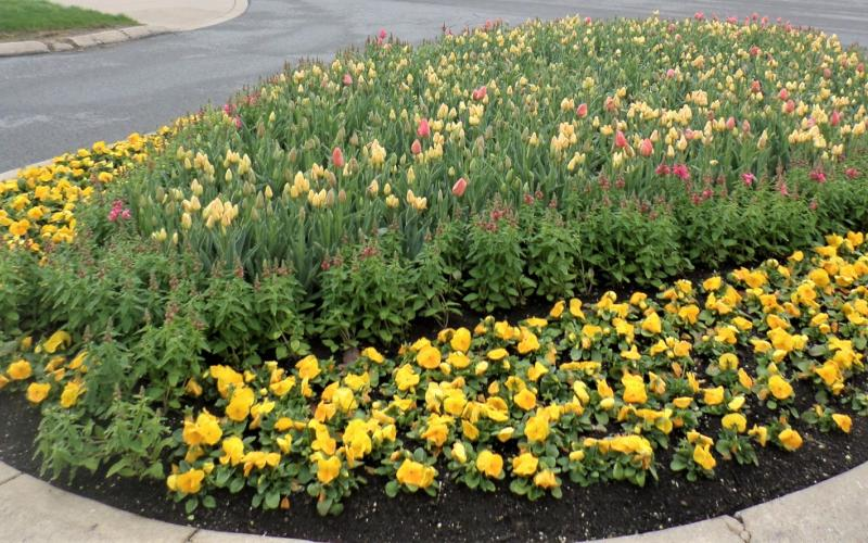 large flower bed