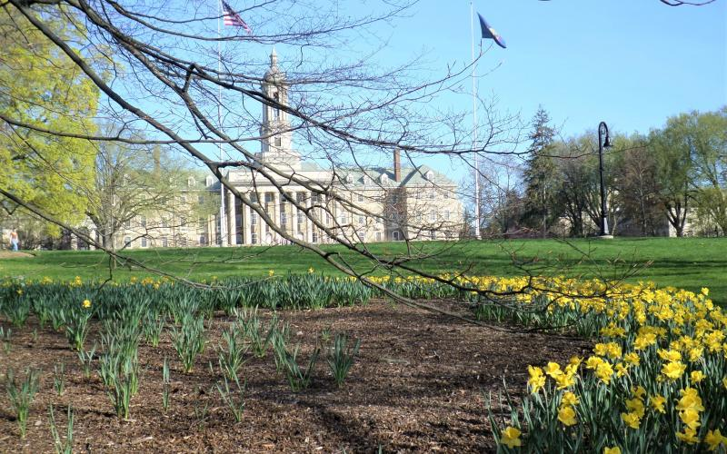 yellow flowers in front of Old Main