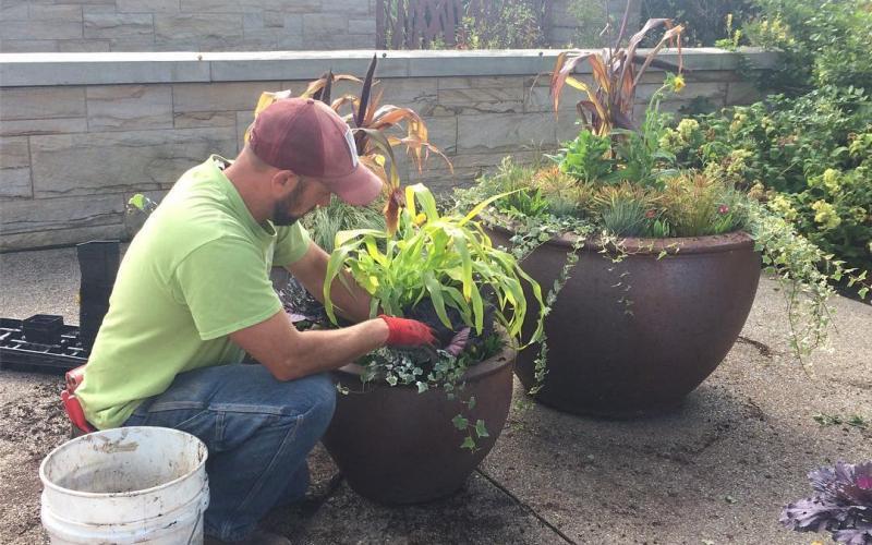 landscape worker plants flowers