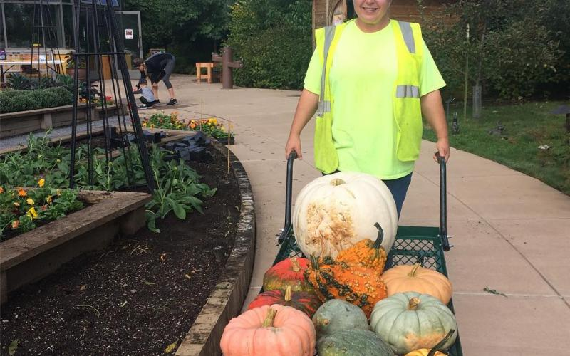 Landscaper moves pumpkins