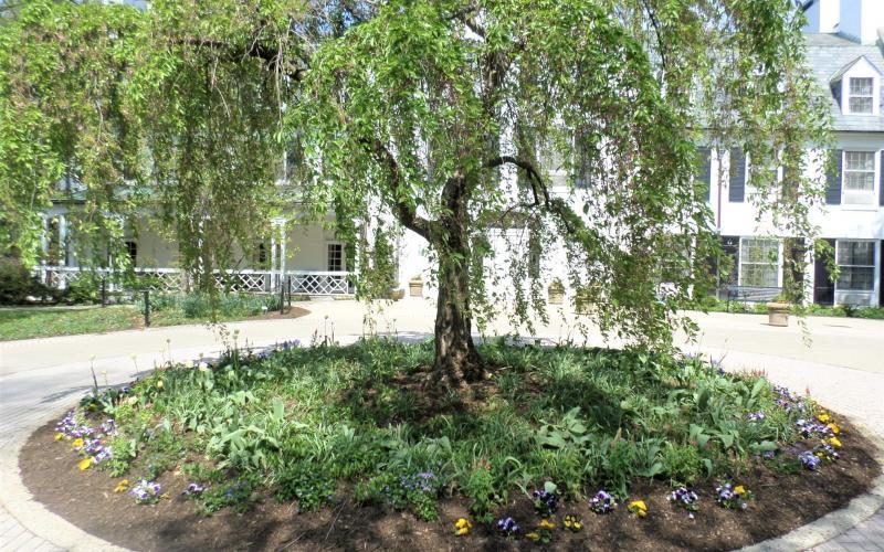 Nittany Lion Inn tree