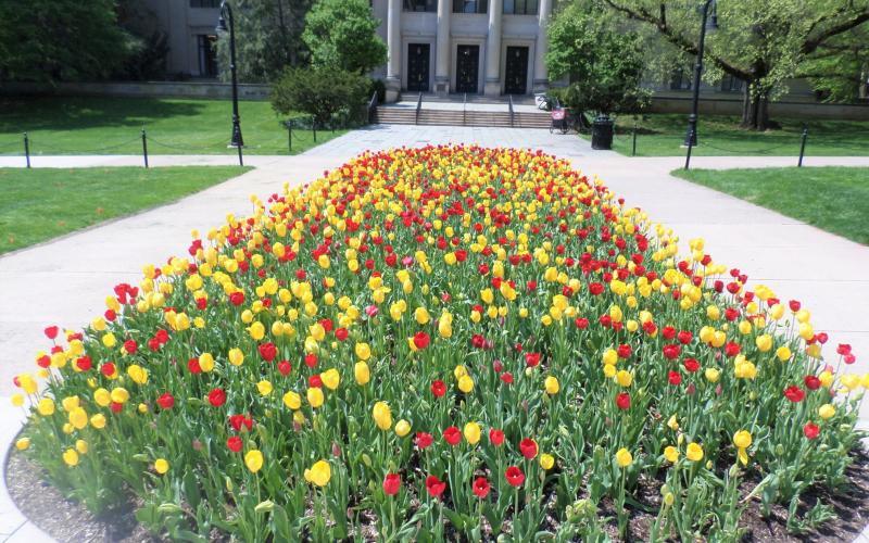 roses near library