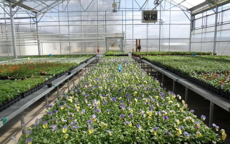 Spring plants 2