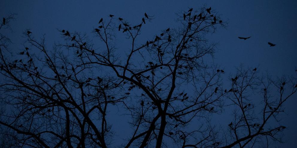 birds in tree at night