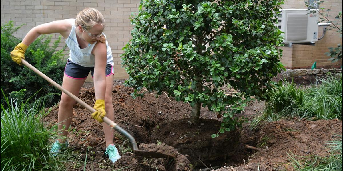 Student shovels dirt while planting tree